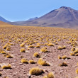 Stock Photo: Atacamdesert.