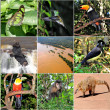 A collage made from Iguazu National park pictures. — Stock Photo