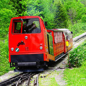 Narrow gauge train. — Stock Photo
