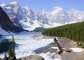 Bald eagle on Moraine lake background. — Foto Stock