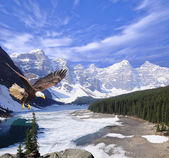 Bald eagle on Moraine lake background. — Zdjęcie stockowe