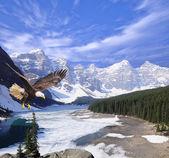 Bald eagle on Moraine lake background. — Stock Photo