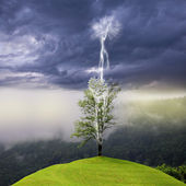 Tree on the hill struck by lightning from dark sky. — Stock Photo