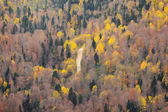 Flight above the autumn forest. — Stock Photo