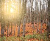 Foggy mountain forest at sunset. — Stock Photo