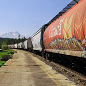 Long freight train. — Stock Photo