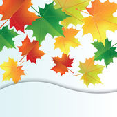 Autumn leaves on the white background. — Stock Vector