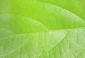 Extreme macro of green leaf with veins like a tree — Stock Photo
