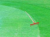 Golf field. beautiful green landscape — Stock Photo