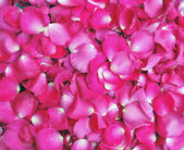 Petals pink roses background — Stock Photo