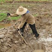 Woman Digging a soil — Stock Photo
