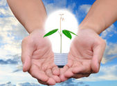 Light bulb in hand (green tree growing in a bulb) — Stock Photo