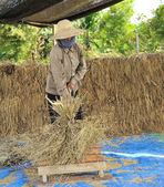 The traditional way of threshing grain in thailand — Стоковое фото