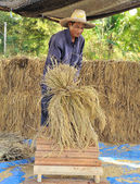 The traditional way of threshing grain in thailand — Stock Photo