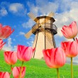 colorful field of tulips and windmill — Stock Photo