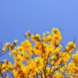 Yellow flowers bloom in spring — Stock Photo