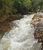 深林瀑布 — 图库照片