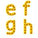 Sunflower alphabet isolated on white background — Stock Photo