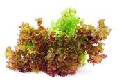Fresh green lettuce leaves — Stock Photo