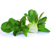 Bok choy (chinese cabbage) isolated on white — Stock Photo