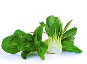 Bok choy (chinese cabbage) isolated on white — Stock Photo