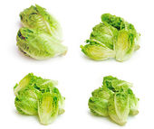 Lettuce on white background — Stock Photo