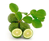 Kaffir Lime with leaves — Stock Photo