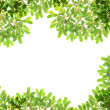 Panoramic Green leaves on white background — Stock Photo #28429701