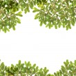 Panoramic Green leaves on white background — Stock Photo #28429873