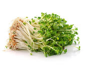Bean Sprouts on White Background — 图库照片