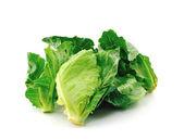 Chinese kale vegetable — Stock Photo