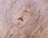 Wood - texture — Stock Photo