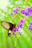 Butterfly on a flower with light reflect in morning — Stock Photo