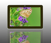 Butterfly on a flower with light reflect in morning in theTablet — Stock Photo