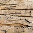 Old wood wall texture background. — ストック写真