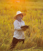 farmer in field, it's harvest time — Stock Photo