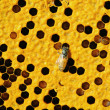 Stock Photo: Close up view of working bees on honeycells