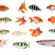 Fish collection with many different tropical fish — Stock Photo #28557309