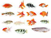 Fish collection with many different tropical fish — Stock Photo