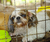 Closeup of a dog cage — Stock Photo