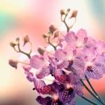 Beautiful Orchid border — Stock Photo
