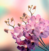 Beautiful Orchid border — Stock Photo