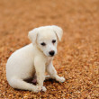 Puppy dog — Stock Photo #32158947
