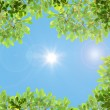 Green leaves and sun — Foto Stock
