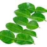 Kaffir lime leaves — Stock Photo #32722415