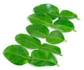 Kaffir lime leaves — Stock Photo