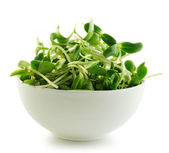 Green young sunflower sprouts in the bowl isolated on white bac — Foto Stock