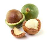 Macadamia nuts on white background — Stock Photo