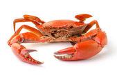 Sea crab isolated on white background — Stock Photo