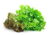 Fresh green lettuce leaves isolated on white — Stock Photo